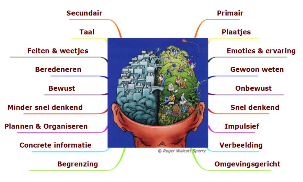 Je ziet de achterkant van een hoofd waar het schedeldak vanaf is. Links is het hoofd in hokjes verdeeld, rechts een groen park met spelende, creatieve mensen. Het linkerbrein is het secundaire brein en goed in taal, feiten & weetjes, beredeneren, plannen & organiseren, concrete informatie en begrenzing. Het is een minder snel denkend brein en zorgt voor onze bewustwording. Het rechterbrein in ons primaire brein, en denkt in plaatjes. Hier wordt je je gewaar van emoties & ervaringen en het gewoon weten. Het werkt onbewust, is snel denkend & impulsief, werkt met verbeelding en is omgevingsgericht.