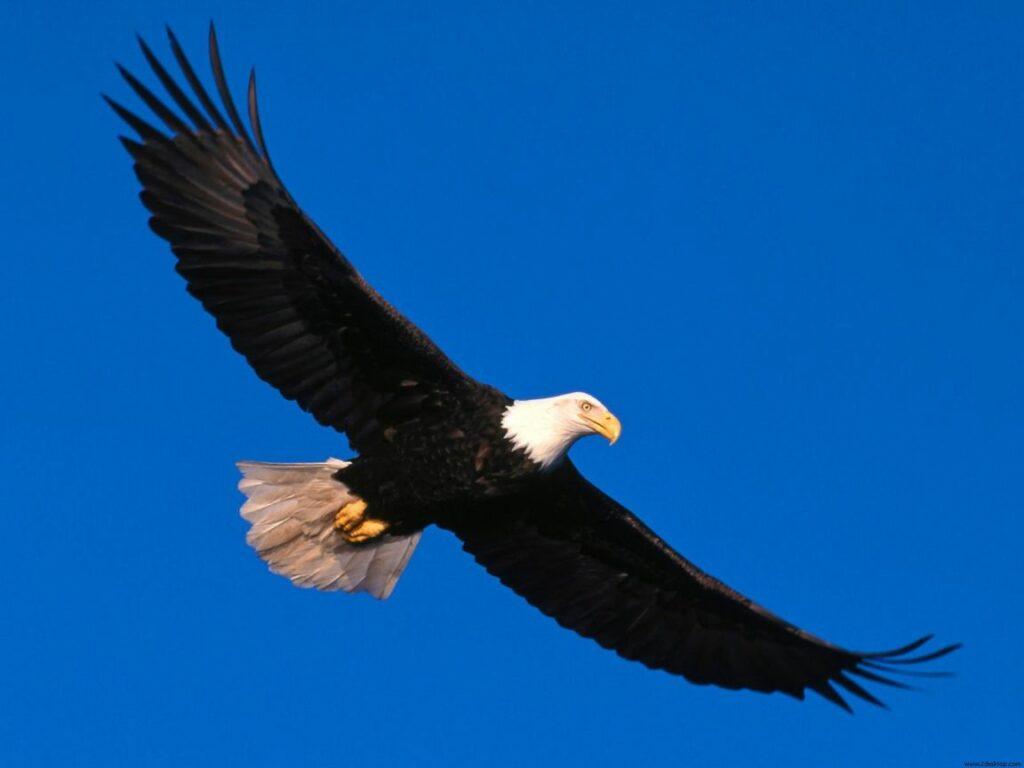 Afbeelding van een adelaar. De adelaar wordt in de lezing beelddenken en autisme gebruikt om te laten zien hoe je je zou kunnen voelen.